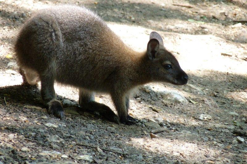 Chateau de sauvage parc animalier for Parc animalier yvelines